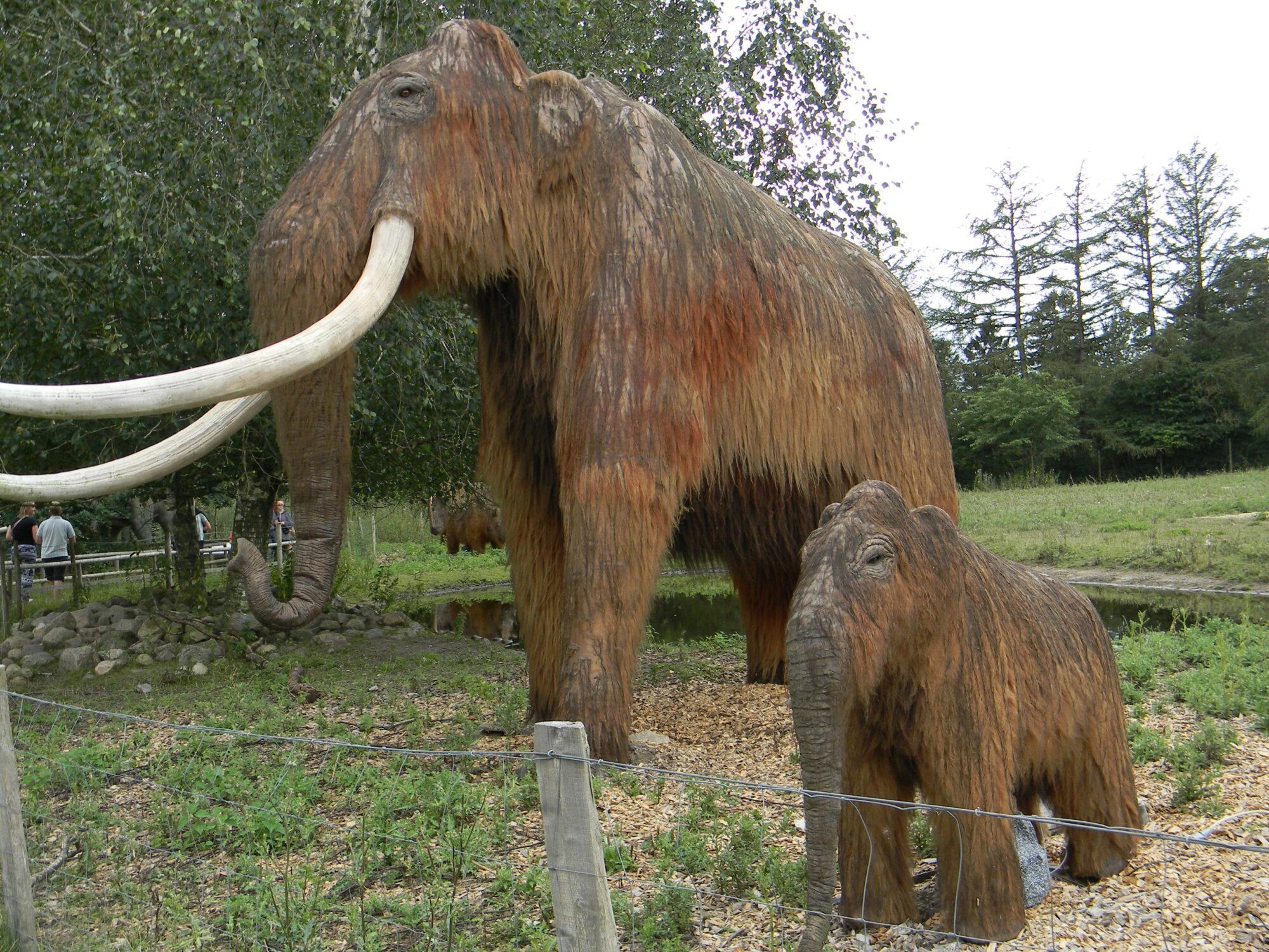 Mammut i Givskud Zoo