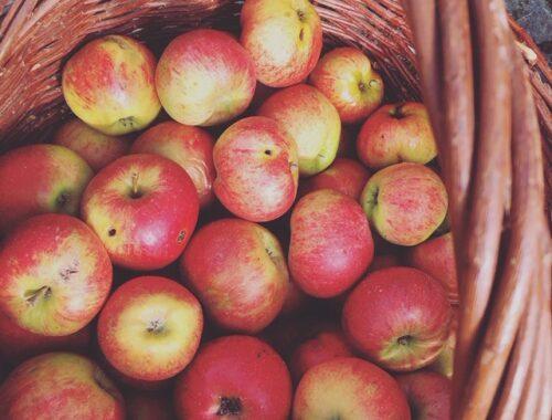 Æbler i kurv til æblemost fremstilling