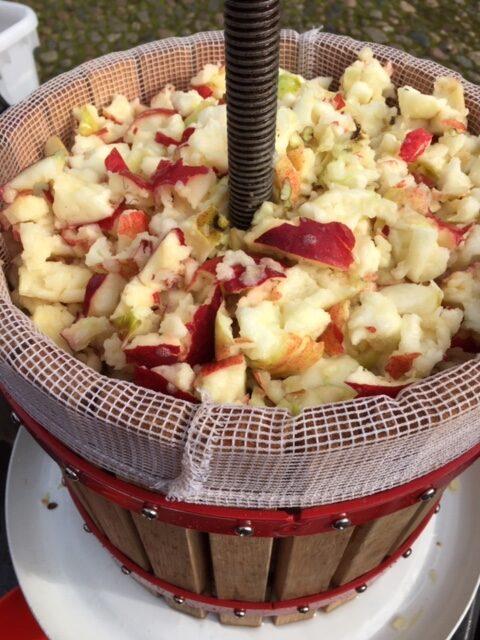 Kværnede æbler i æblepresser