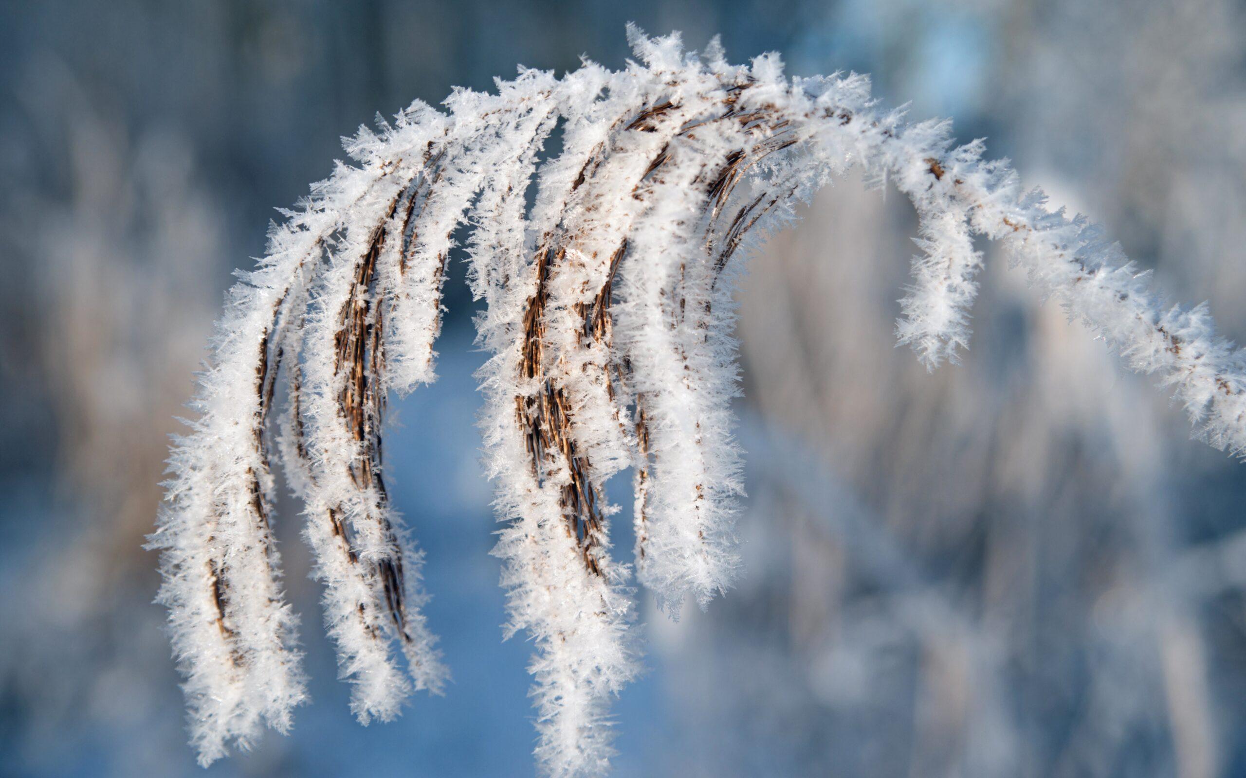 Naturen i smuk forvandling
