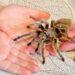 Bange for edderkopper?